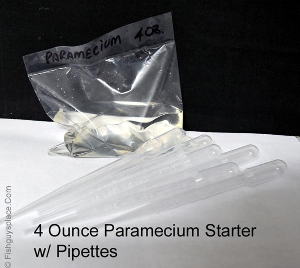 paramecium start culture